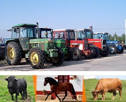 https://mltvbx3uwskb.i.optimole.com/JisIFNc-_Va-tDKM/w:433/h:353/q:85/https://amvaluaciones.com/wp-content/uploads/2016/09/Valuación-de-animales-y-bienes-agropecuarios-ganado.jpg